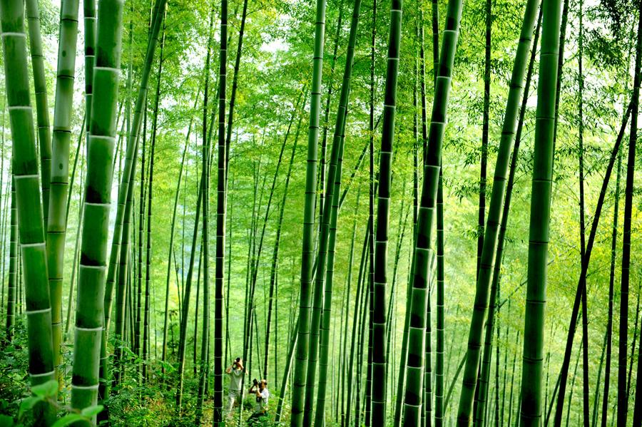 壁纸 风景 森林 植物 桌面 900_599
